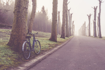 Bike in a street surrounded by trees on a cold foggy morning