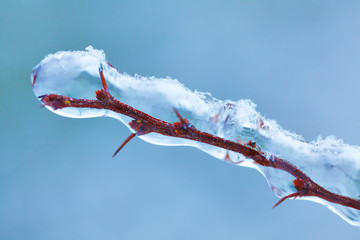 Branch covered with ice in winter