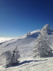 Snow Cover Dreamland
