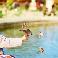 Man feeding sparrows