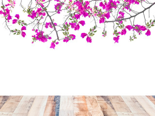 Pink Bougainvillea flower and wood board