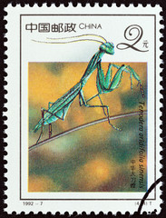 Chinese mantis, Tenodera aridifolia sinensis (China 1992)