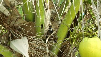 Myna nest