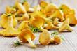 yellow chanterelle (cantharellus cibarius) - 75826818