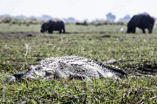 Foto op Plexiglas Krokodil Wildlife
