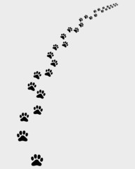 Black trail of cat, turn right, vector illustration