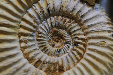 abstract amonite fossil background