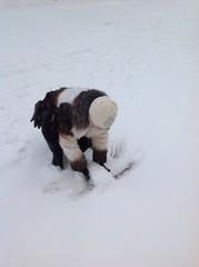 девушка собирает снег для снежка