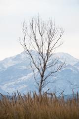 Albero in inverno e Majella sullo sfondo