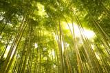 Fototapeta Bamboo Forest in Japan. Bamboo Groove in Arashiyama, Kyoto