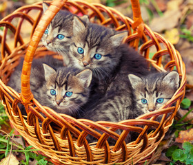 Cute kittens sitting in a basket outdoors