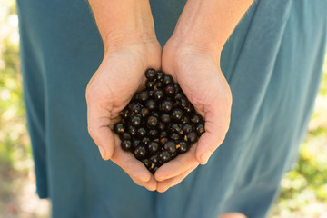 woman holding a handful of black currant
