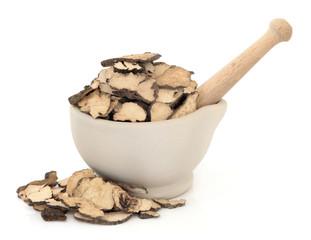 Mushroom Fungus Herb