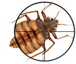 Leinwanddruck Bild - kill insects, machine gun, sight, target,