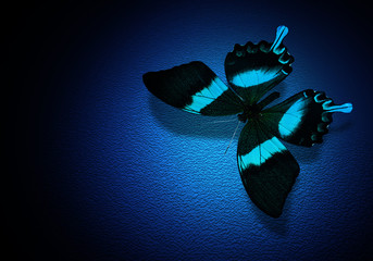 Turquoise butterfly on dark blue background