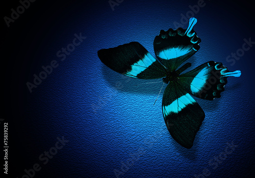 canvas print picture Turquoise butterfly on dark blue background