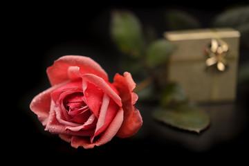 rosa pacchetto san Valentino amore