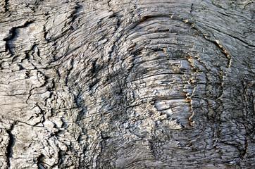 Knorriges altes Holz – Gnarled old Wood