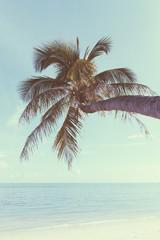 Vintage nostalgic stylized palm tree on tropical shore