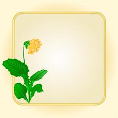 Spring flower primrose gold background  vector