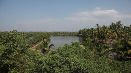 View of the jungle in India in Goa