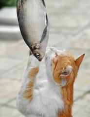 Добыча, еда. Кошка, стоя на задних лапах, схватила крупную рыбу