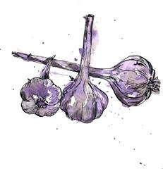 Hand drawn garlic