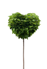 Green Heart Tree. Isolated on white