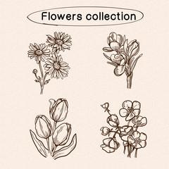 Flowers sketch elements.