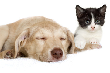 puppy and kitten lying