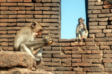 Monkey mother and her son on wall in the temole.