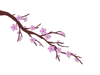 pink sakura cherry blossom branch spring illustration background