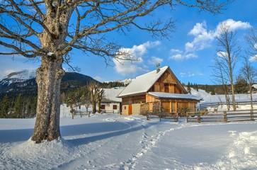 Alpine meadow Uskovnica in Bohinj in Winter