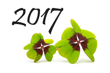 Glücksklee silvester 2017