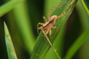 little spider on the leaf