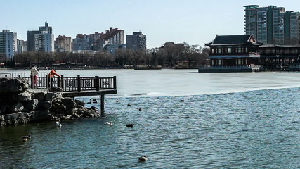 People feed ducks and geese in Longtanhu Park in Beijing, China