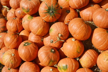many pumpkin from farm background