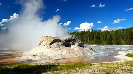 Grotto Geyser Yellowstone National Park