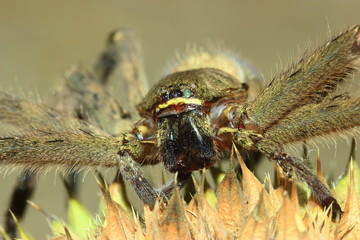 A large spider on the grass with sharp edges.