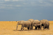 canvas print picture - African elephants in grassland, Amboseli National Park
