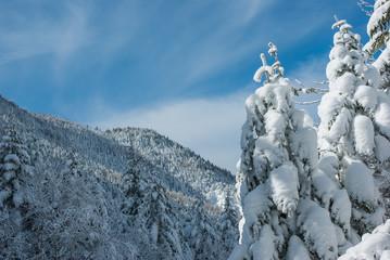 樹氷と山と雲と空