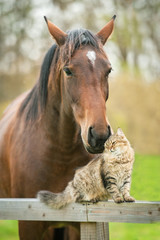 Friendship of cat and horse
