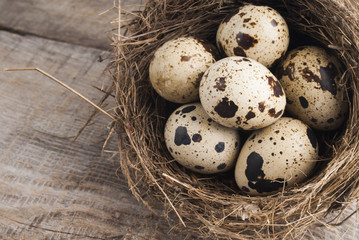 quail eggs in nest