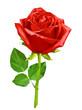 Obrazy na płótnie, fototapety, zdjęcia, fotoobrazy drukowane : Red polygon rose