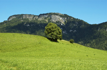 Meadow, tree and mountain