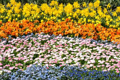Fotobehang Narcis Flower Carpet