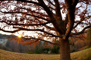 sunset behind oak tree in mountains