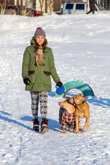 Young woman walking with two American Pit Bull Terrier winter