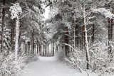 Fototapety Snowy Road through the wintry forest