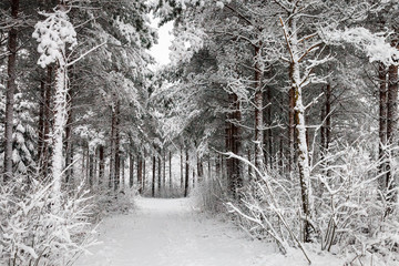 Snowy Road through the wintry forest